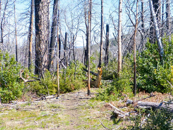 Big Pines, on the other hand, was wiped out.  This is the trail junction.