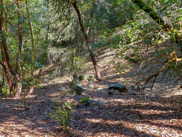 After a late start -- I couldn't find my keys -- I dayhiked down the Pine Creek Trail.  This flat under madrones just as the trail reaches Pine Creek might make a nice campsite.