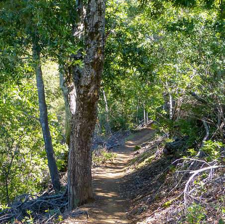 Friday, March 2.  The trek up Skinner Ridge from the Bottcher's Gap trailhead passes mainly through oak and madrone forest.