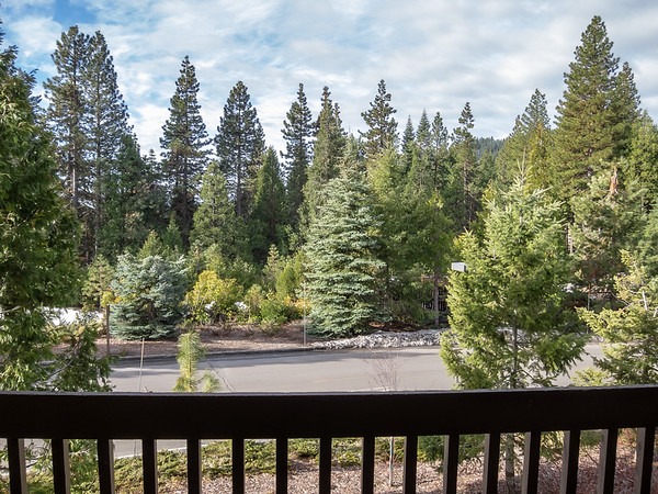 The view from our room.  We are in the mixed coniferous forest: ponderosa and sugar pines, Douglas and white firs, incense cedar.