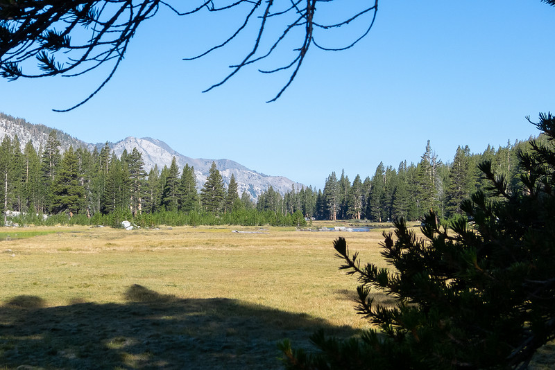 Looking down the meadow.