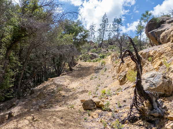 Up the Rodeo Flats Trail.  It's an old road/firebreak: steep, rocky/sandy, mostly clear (as here) or filling in with scattered low plants.