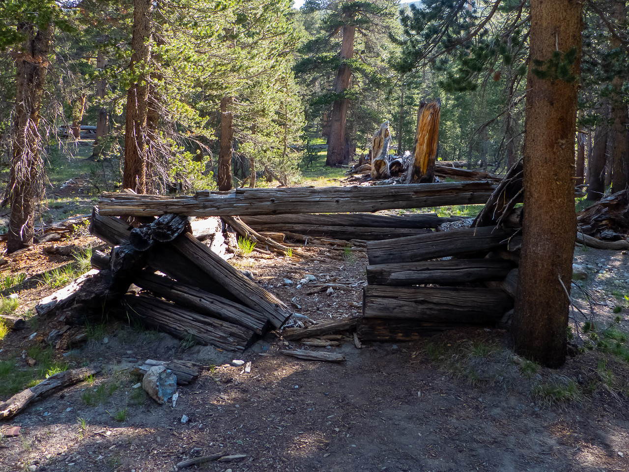 There were two of these collapsed log cabins along the trail.