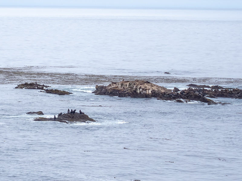 At the end, I had a distant view to Sea Lion Rocks and their barking sea lions from the Cypress Grove Trail.