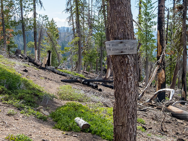 "The understory shows the mix of burnt and green.  ""Burnt Camp"" had its name before 2008.  How many fires has that camp seen?"