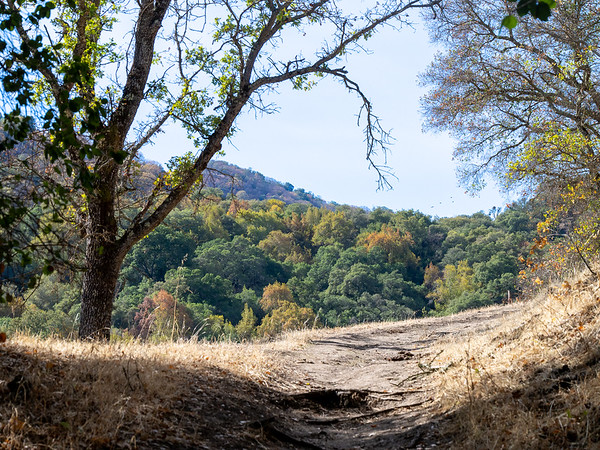 Nov. 3.  Sunol.  Heading up Flag Hill: a little oak color on the hillsides.  No green grass in sight up here.
