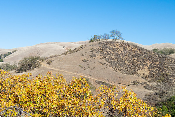 Nov. 3.  Sunol.  As this view toward Vista Grande suggests, the deciduous oaks are in various states: some showning some yellow color, some mostly down.  As at Las Trampas, many of the trees seem to be going from green to brown without much yellow between.