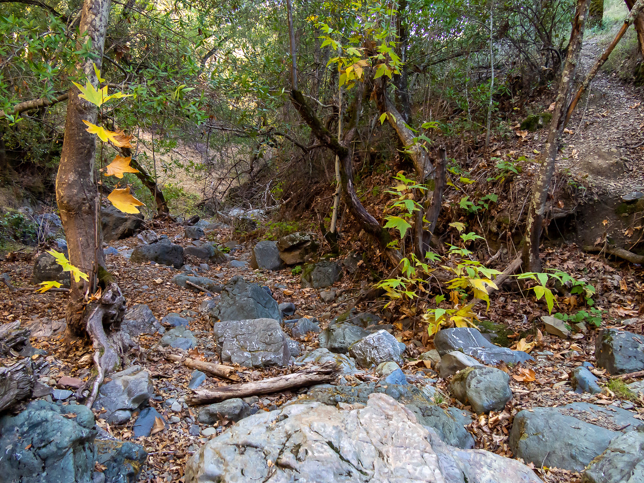 The Little Fork of Coyote Creek was dry.  I eagerly look forward to having enough rain that the creeks flow again.