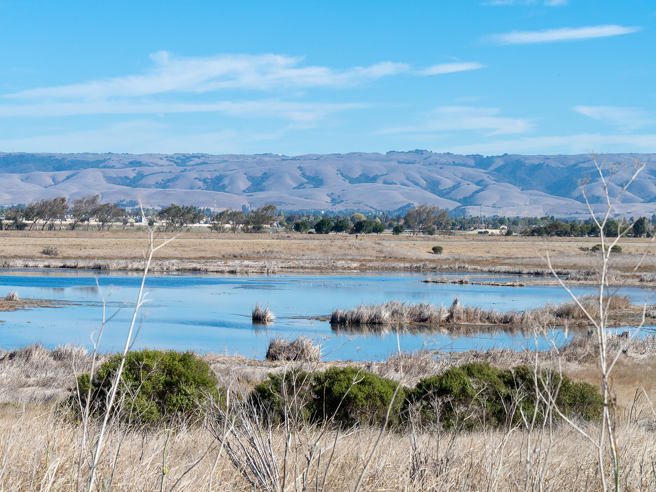 North Marsh, closer to Alameda Creek, had water.