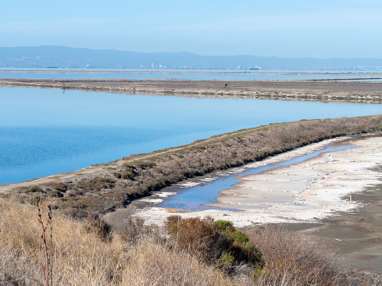 Beyond the hills are dikes separating former salt evaporation ponds.  That's  still salt down there on the mud flats, but it's not collected commercially here any more.  Beyond the last dike -- my route today -- lies the open Bay.  The ponds and dikes are in mostly in the National Wildlife Refuge.