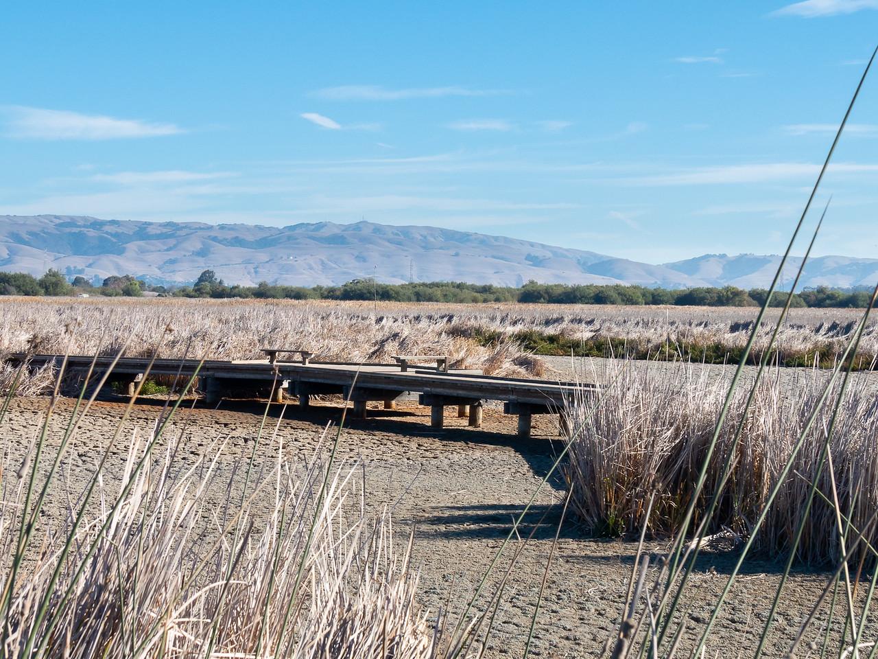 Main Marsh was dry.