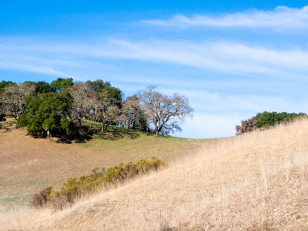 January 26, 2014.  Briones Reservoir.  There are more open hillsides of grass here than I saw on the earlier weekend trips ... hillsides of *brown* grass.  But a little green under the trees speaks of some short but live grass.