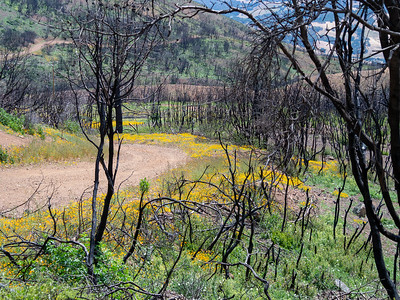 Mt Diablo: May in the Fire Zone - May 16 & 18 2014