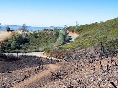 Mt Diablo: The First Months after the Morgan Fire - 2013-2014
