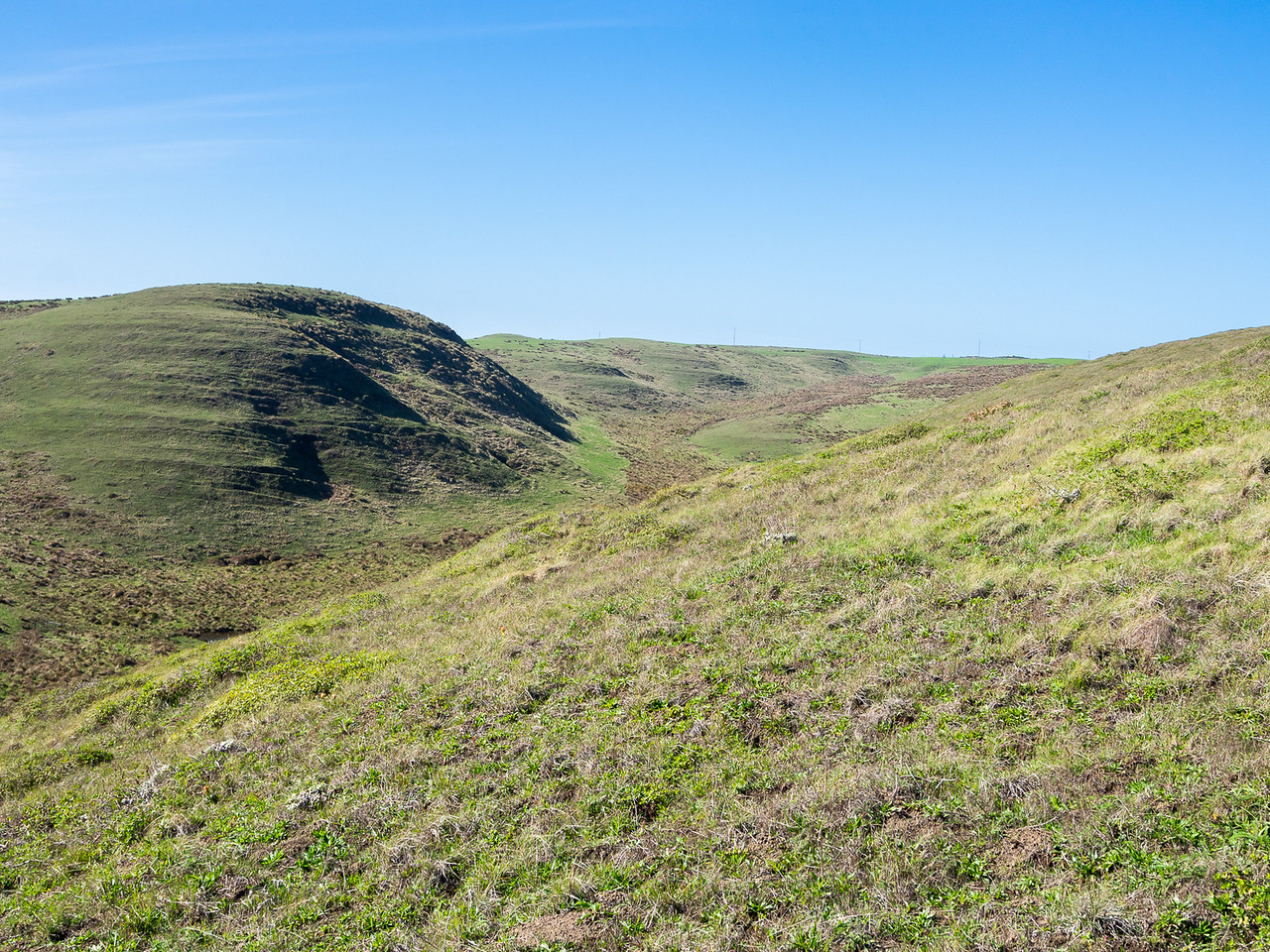 I went back up for the remainder of my hike.  On and behind the bluffs it's grazing land: the Pt. Reyes Pastoral Zone.  Ranches here go back to the 1850's.