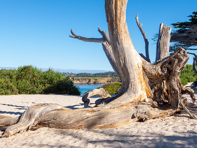 Pt Lobos and Carmel - July 2014