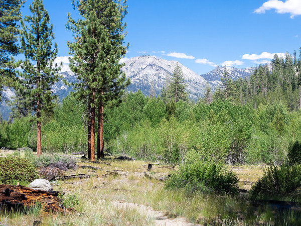 The top of Sugarloaf Valley is dry and sandy, with Ponderosa pines and aspens.
