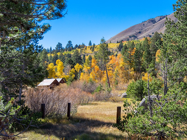 Leaf Peeping at Carson Pass- October2014