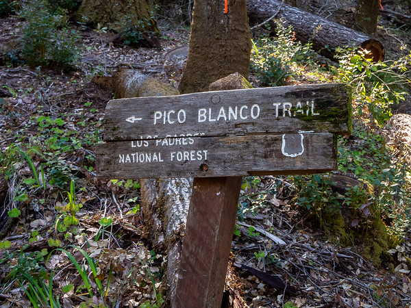 Past the camp and across the river now (on a cement road bed).   It appears the connector from the Scout Camp up to the Little Sur Trail -- just a few switchbacks -- is the Pico Blanco Trail.