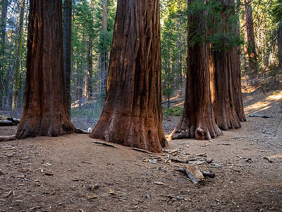 Merced Grove and the Pohono Trail- Yosemite- Jan2014