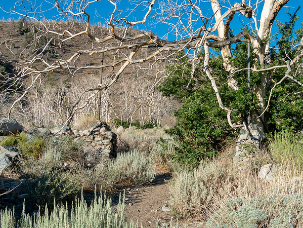 I hit the trail early to avoid too much low-elevation heat.  (It's not quite 7AM).  There were remains of an old homestead just above camp.  This sagebrush scene is at about 6,000'.