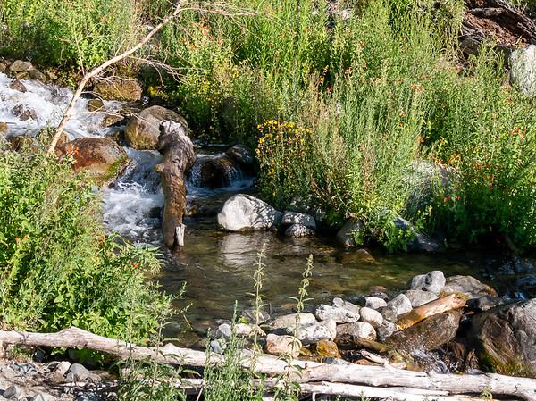 The first Oak Creek crossing: a simple rock hop.  Scarlet monkeyflowers down here too.