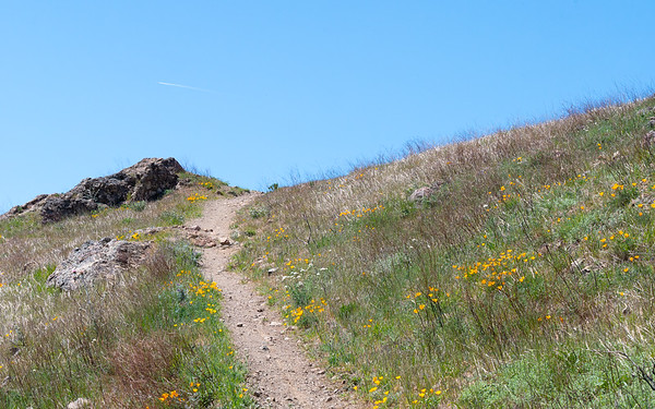 There are flowers on these open, exposed, grassy hillsides, but nothing like at Muir Picnic Area.