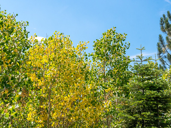 It's only mid August, the some of the aspens are showing color.