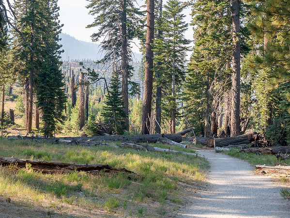 The first part of the Fish Creek Trail is a very wide, very popular route to Rainbow Falls.  It starts in the trees but quickly comes to the edge of the 1992 Rainbow Fire.