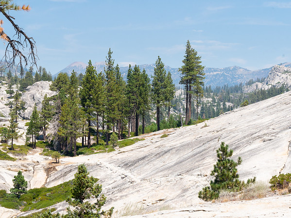 I didn't remember much from my trip here in 1982, but I do remember walking over the open granite, full, at the time, with penstemons.  Today there were one or two in spots, but most was pretty bare.  San Joaquin Mountain in the far background.