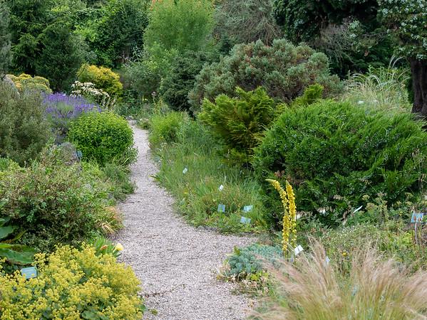 Der Alpengarten im Belvederegarten.