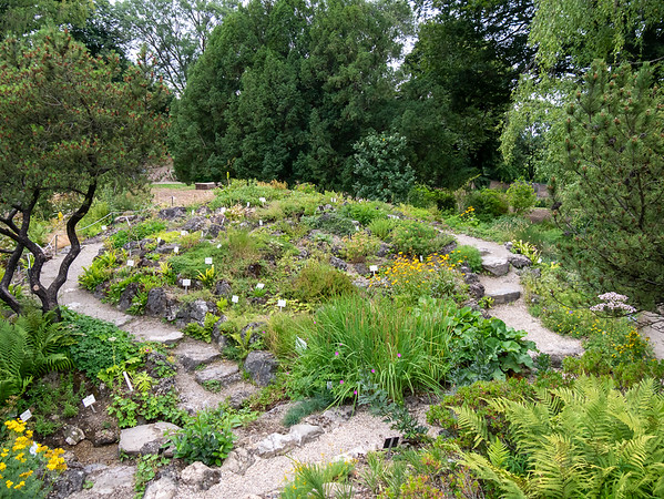 The small alpine garden -- not the famous one farther back -- by the main entrance to the University of Vienna Botanical Garden.  It was a very short walk from the hotel.