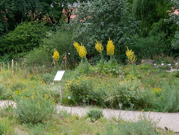 Die Wienerwald-Wiese.  I'll admit I find this sort of environmental planting more interesting than the bed-and-specimen approach.