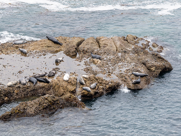 Sea lions at the end of the point.  I don't need a video to show how much they move: except for the waves, this still captures most of the action.