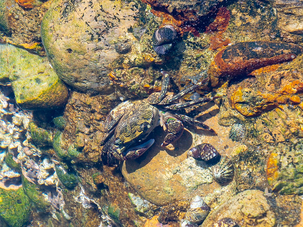 There were lots of crabs in that pools.
