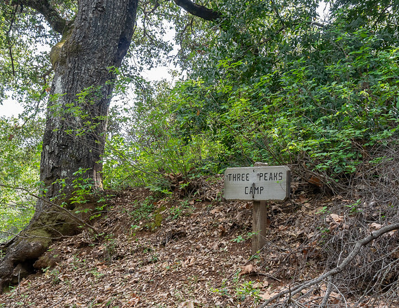 Three Peaks Camp has a new sign, graced, perhaps appropriately, by plenty of poison oak.  There are camping areas to both the left and right.