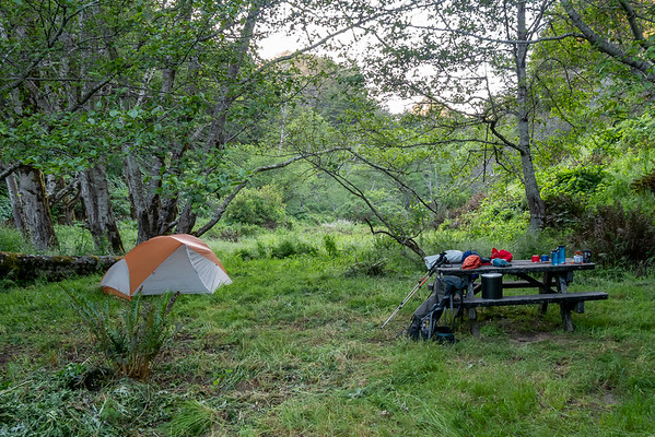 """Bear Harbor Camp #1.  When the road was open this was an """"Environmental Camp"""" -- essentially a long walk-in car campsite.   Now, three miles in, it's a trail camp, but a fancy one.  Those big trees behind the tent are red alders (Alnus rubra)."""