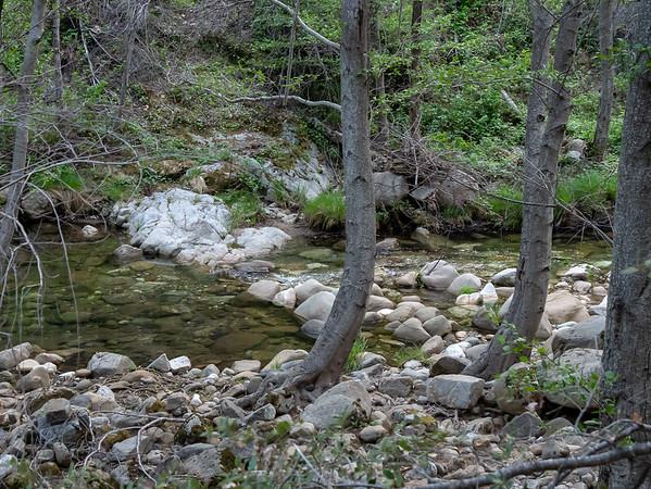 I walked all the way down to Arroyo Seco ... about a mile each way and 500' feet down!  Longer than I expected, but pretty.
