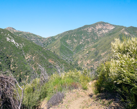 On the trail now, heading down to Arroyo Seco again.  A glorious bright but crisp morning.  The trail zig-zaging up to the saddle at the to left is quite apparent.