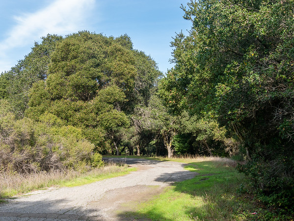 On the Old San Pablo Trail.  This was the road once.  It parallels the San Pablo Reservoir a few hundred feet back from the shore, maybe 50 feet higher than water level.