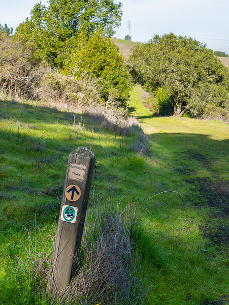 Heading out on the Inspiration Trail.  Open grassland with oaks and bays up here.