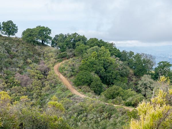 On Las Trampas Ridge, looking north.  The top of Las Trampas Peak is just to the left.