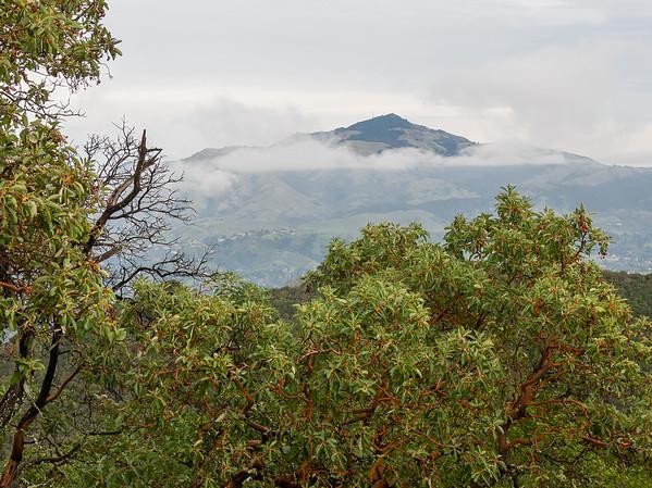 Looking east.  Mt. Diablo above.  Madrones with berries below.