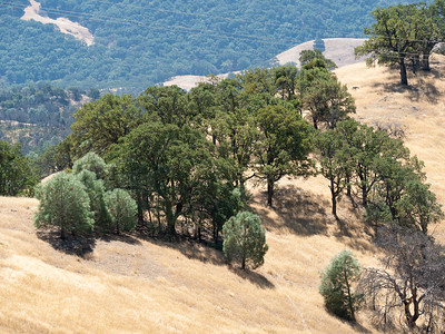 Mt Diablo: Three Yrs after the Morgan Fire - Sept 18 2016
