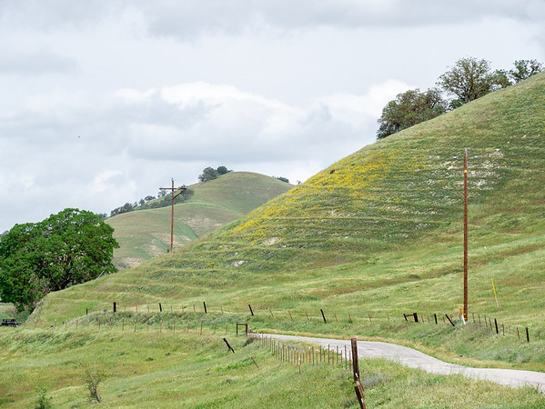 Monday, March 21.  I drove down 101 and turned off in San Miguel, heading out Vineyard Canyon toward Parkfield.   Not far in, I got my first hillside of flowers.