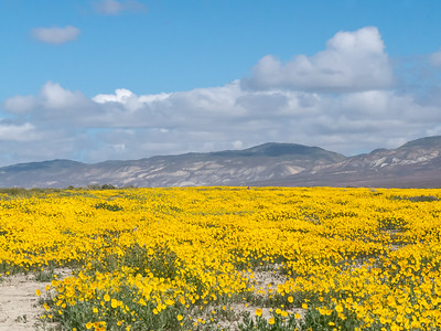 Carrizo Plain - March 2016