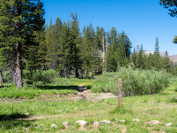 At the PCT Junction, not quite two miles in.  From here the PCT (my round climbs south to a high point, where it crosses to the East Side of the Sierras and the upper Wolf Creek drainage.  It flows to the Carson.  The route mixed flowery open areas and darker forests.