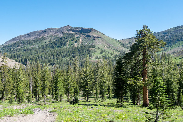 Wednesday, July 6.  Heading in from the Gardiner Meadow Trailhead.  Mixed meadow and open forest.