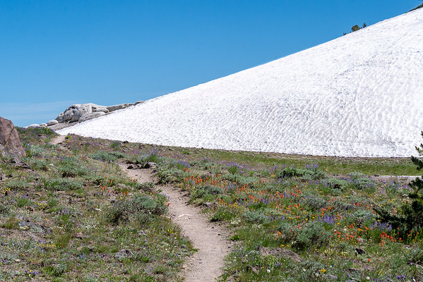 A rather bizarre scene at the divide to the Golden Creek drainage: a field of flowers -- lupines, paintbrush, alliums, buckwheat, yellow daisies, and others -- all beneath a big snow-covered hill.