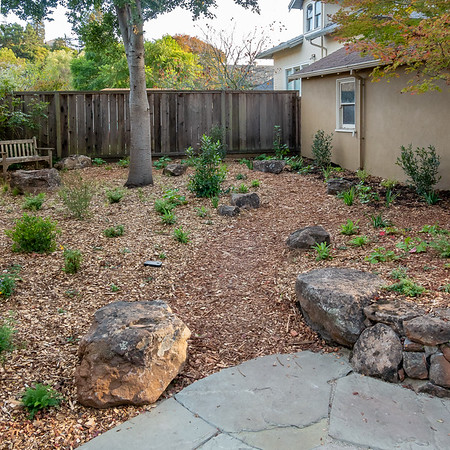 Through these two rocks a mulch path leads back from the patio.  The path circles around the oak and heads to the bench.  It's all Californians back here, many local to the East Bay.